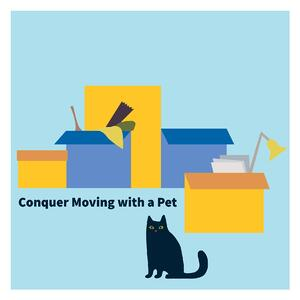 moving with pet blog-01