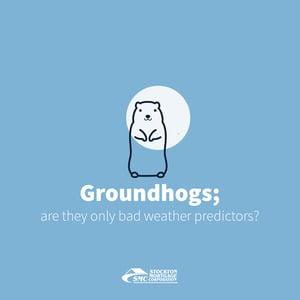 Groundhog 2020 bloggo graphik-01