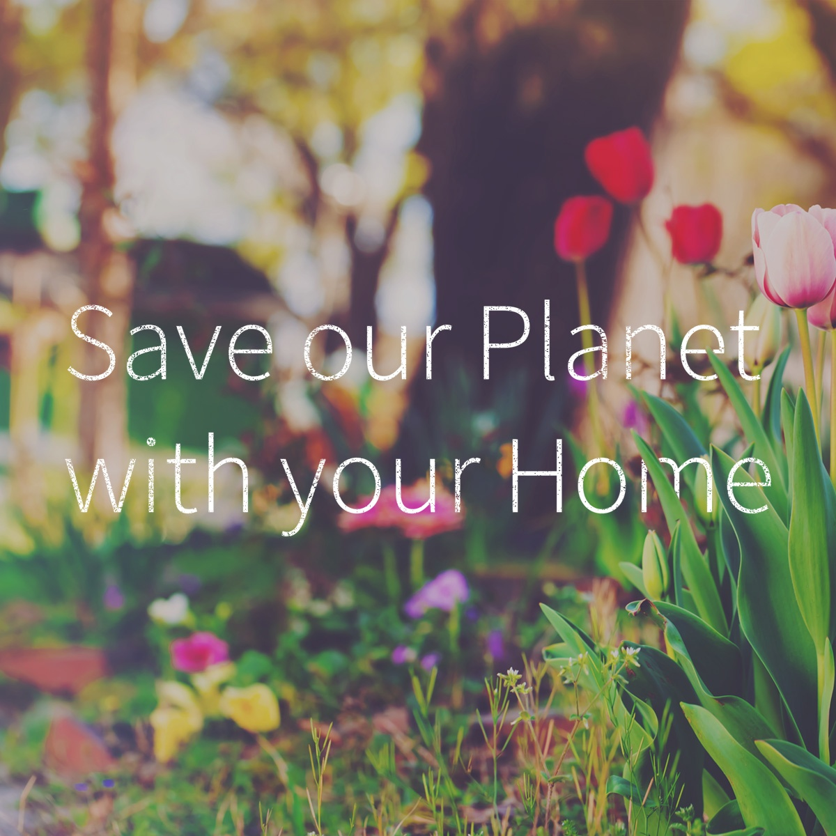 Save our planet with your home blog.jpg