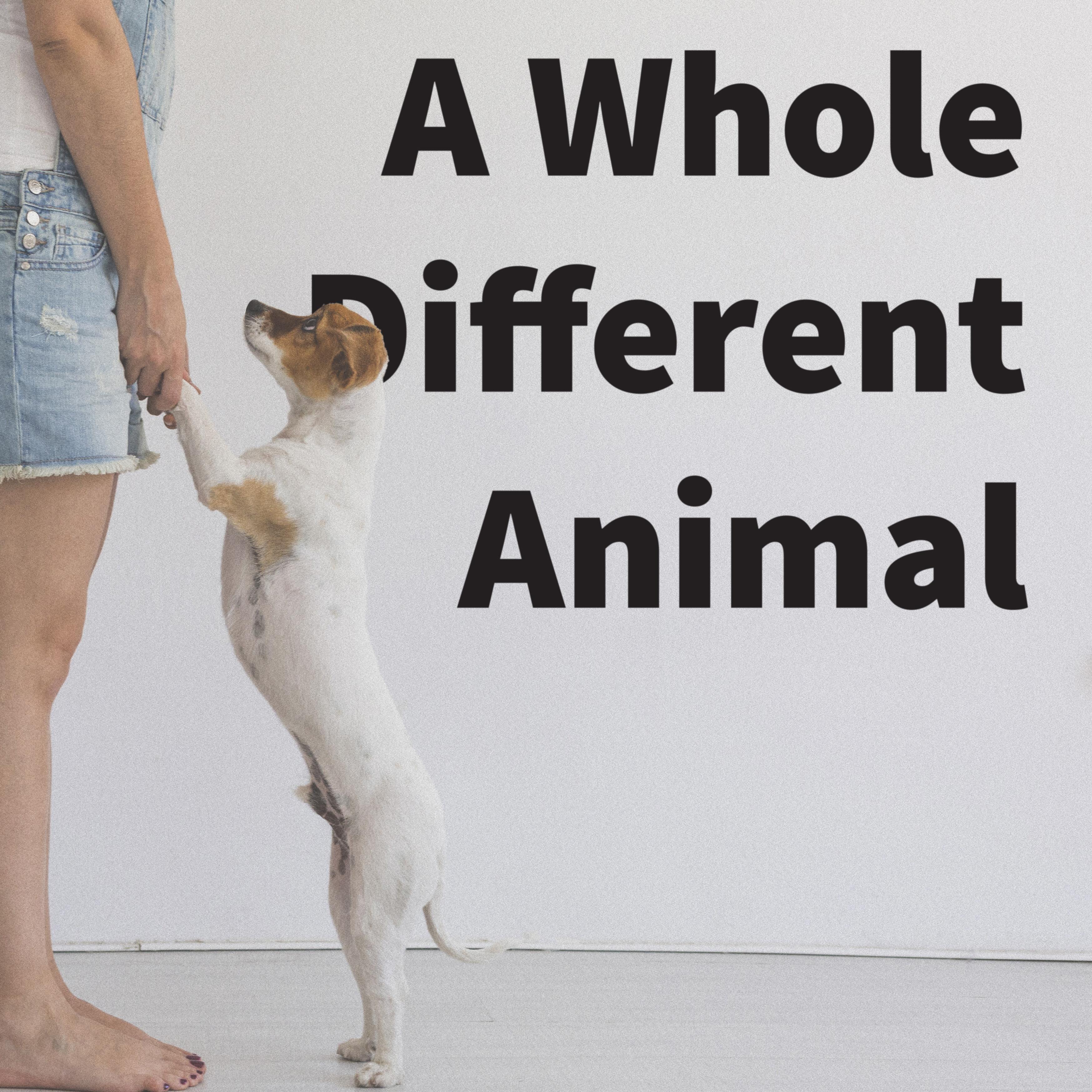 whole different animal blog.jpg